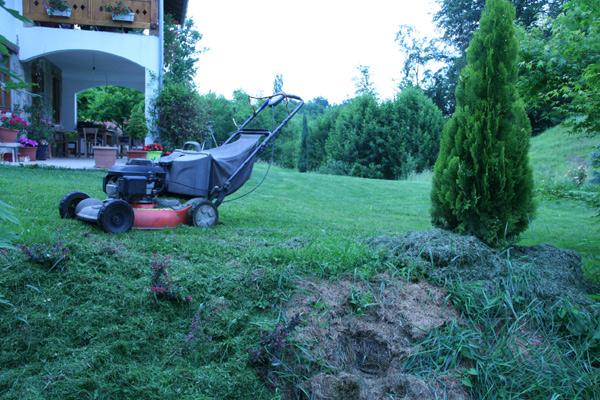 Покошена трава добра за простирку